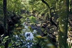 Aucilla River (Geology)